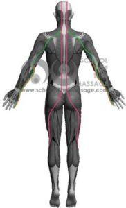Study Thai Massage Online - Channels/ Sen/ Meridians - Sen Itha and Pingkhala Back View mapped ion human muscle anatomy