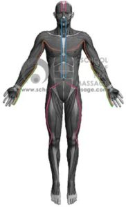 Study Thai Massage Online - Channels/ Sen/ Meridians - Sen Itha and Pingkhala Front View mapped on human muscle
