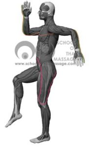 Study Thai Massage Online - Channels/ Sen/ Meridians - Sen Itha and Pingkhala mapped on human anatomy