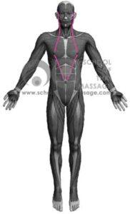 Study Thai Massage Online - Sen Sip - Sen Lawusang Ulangka front view