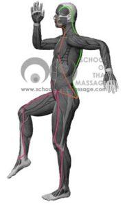 Study Thai Massage Online - Channels/ Sen/ Meridians - Sen Sahatsarangsi Thawari side View mapped on human muscle anatomy