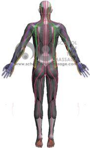 Study Thai Massage Online - Sen Sip - Thai Massage Sen, Meridians Channel - Back View