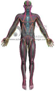 Study Thai Massage Online - Sen Sip - Thai Massage Sen, Meridians Channel - Front View