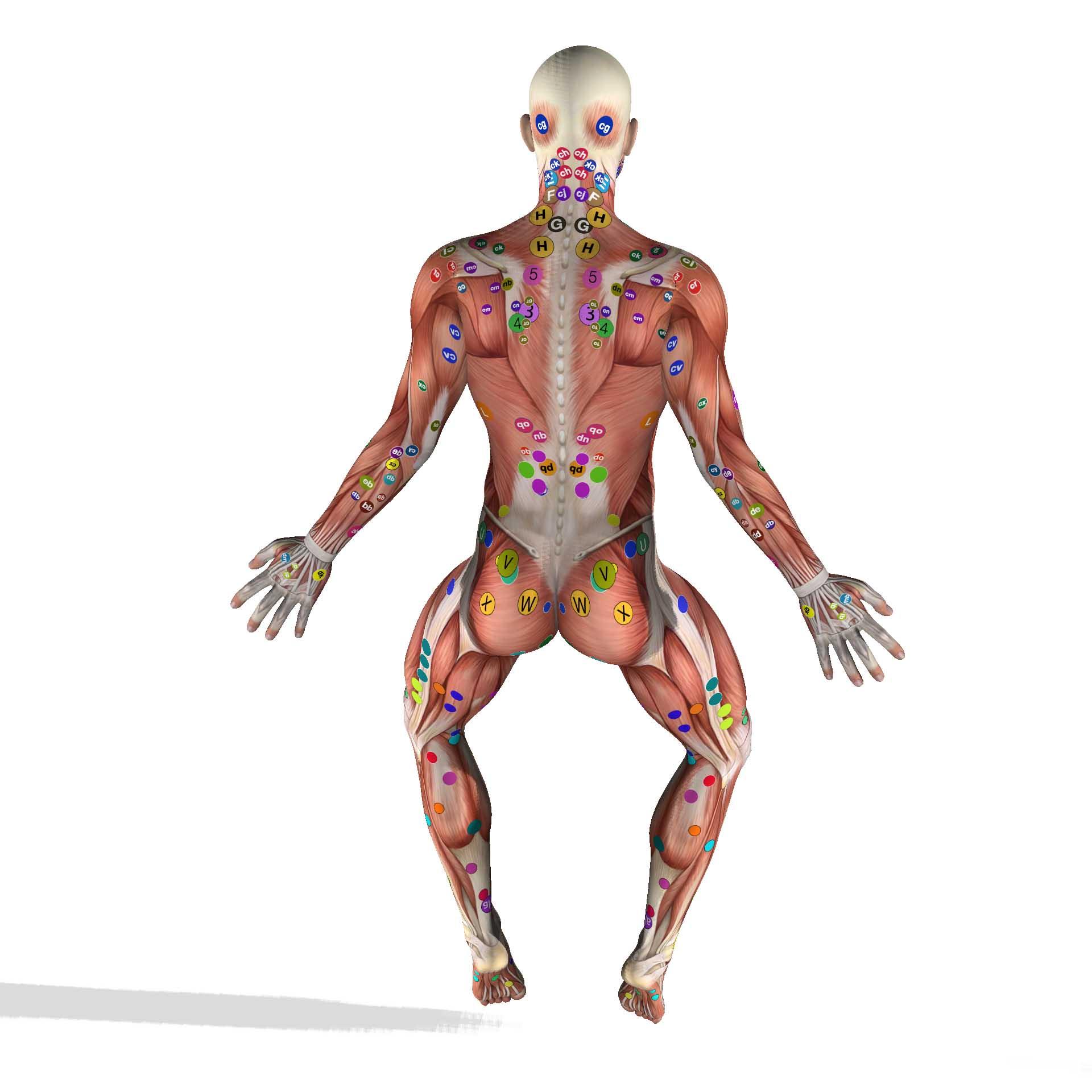 Myofascial adhesions